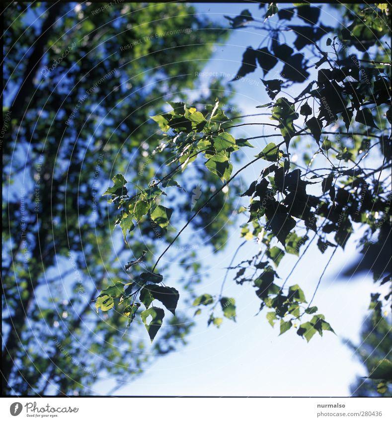 grün Natur Sommer Pflanze Baum Sonne Blatt Wald Erholung Umwelt Garten Kunst träumen Park Stimmung natürlich