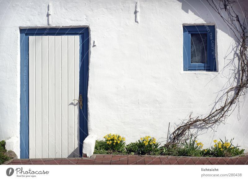 home blau weiß Sommer Pflanze Blume Haus Fenster Wand Mauer klein Garten Tür Fassade Idylle Schönes Wetter niedlich