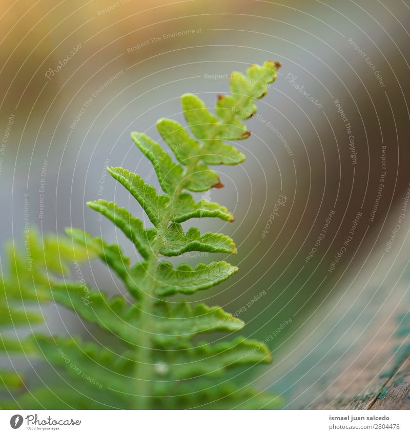 grüner Farn Pflanze Blatt Wurmfarn abstrakt Konsistenz Garten geblümt Natur Dekoration & Verzierung Außenaufnahme zerbrechlich Hintergrundbild Winter Herbst