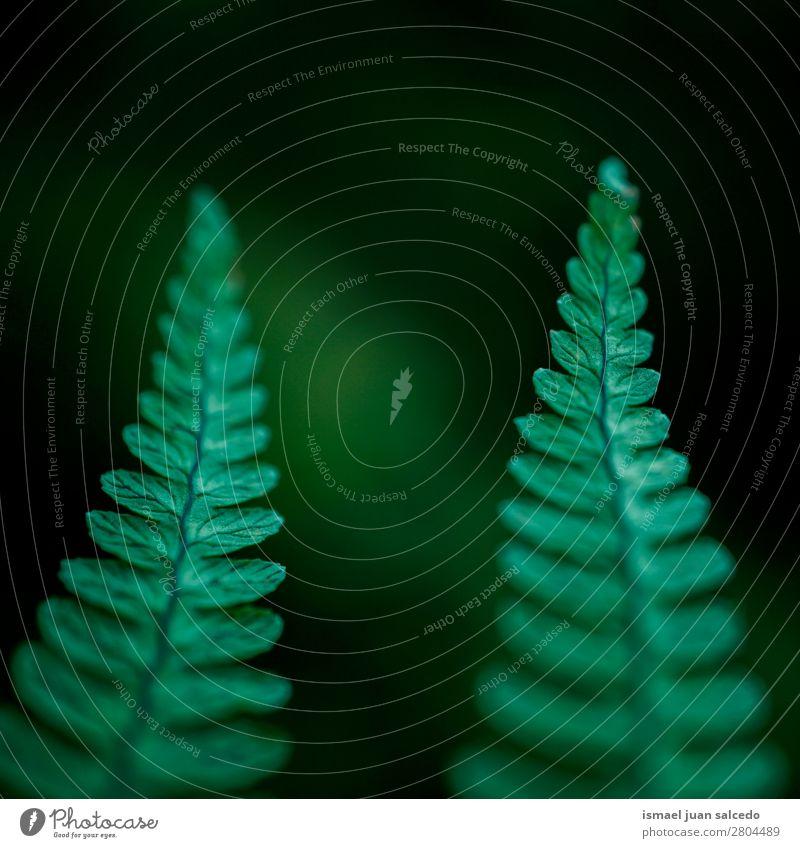 grüner Farn Blätter Textur Wurmfarn Pflanze Blatt abstrakt Konsistenz Garten geblümt Natur Dekoration & Verzierung Außenaufnahme zerbrechlich Hintergrund Winter