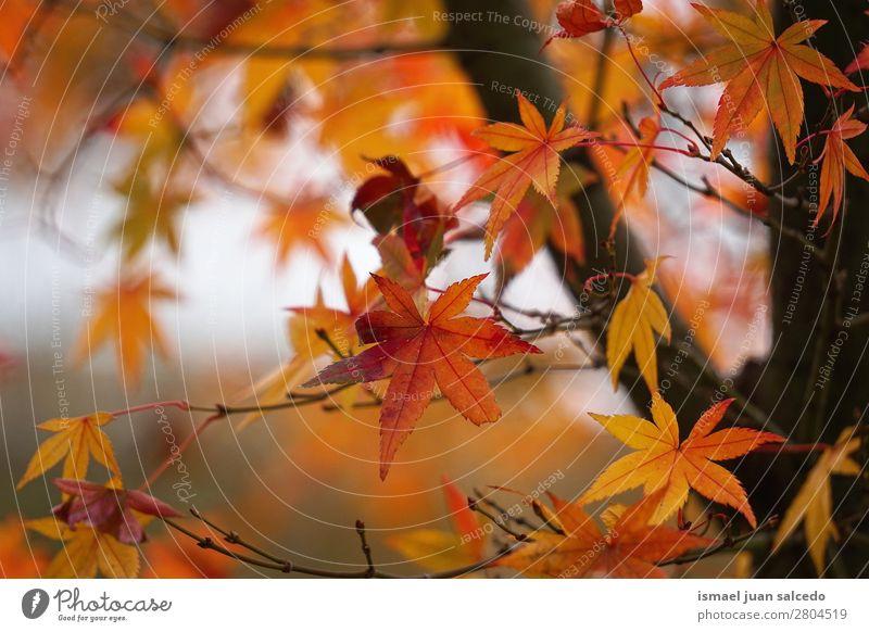 Natur Baum Blatt Winter Hintergrundbild Herbst braun Ast Beautyfotografie Konsistenz zerbrechlich
