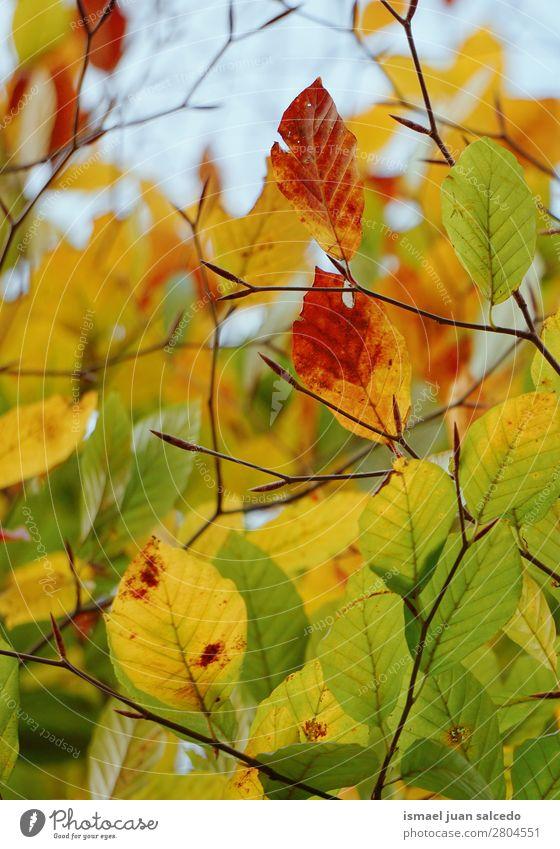 Natur grün Baum Blatt Winter Herbst gelb braun Ast Beautyfotografie Konsistenz zerbrechlich