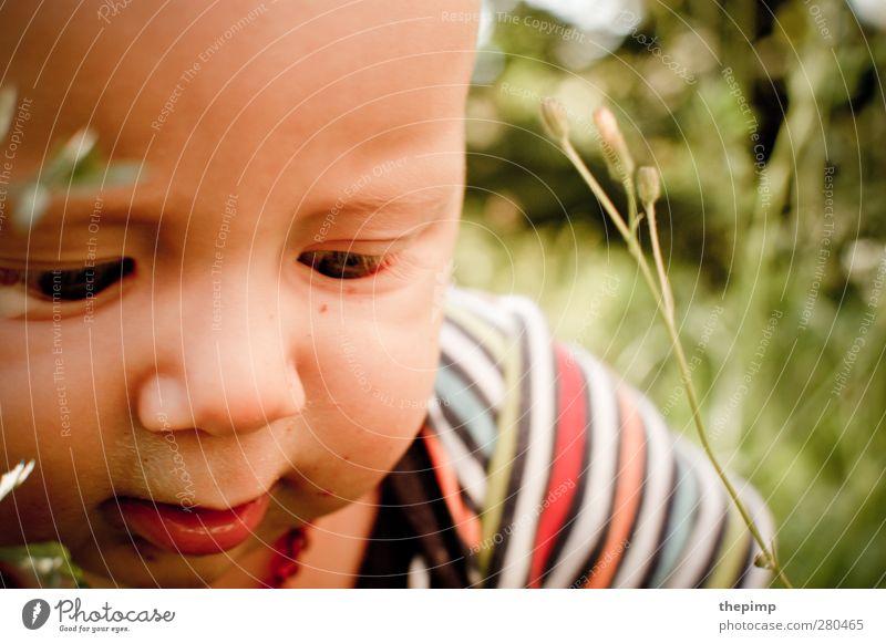 Damals... maskulin Baby Junge Gesicht 1 Mensch 0-12 Monate Natur Gras Neugier niedlich Glück Lebensfreude Frühlingsgefühle Interesse Abenteuer Erfahrung