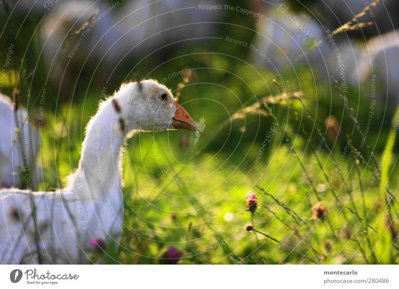 """Viel Glück für """" GLÜCKIMWINKL"""" Natur grün weiß Sommer Pflanze Tier Umwelt Wärme Gras klein Garten Vogel natürlich wild authentisch"""