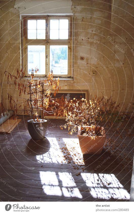 Lichtblick Pflanze Topfpflanze Haus Mauer Wand Fenster Dielenboden alt dreckig Freundlichkeit braun Sicherheit Raum vertrocknet Kontrast Schatten