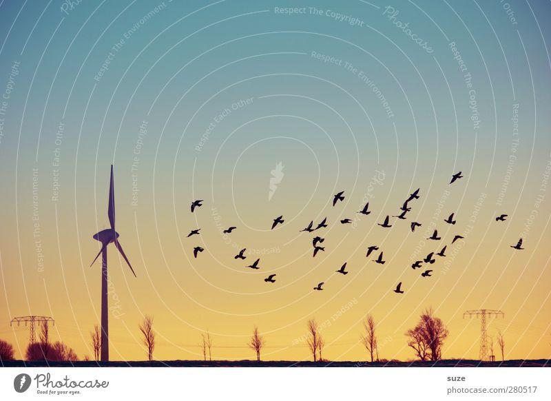 Windzug Ferne Energiewirtschaft Erneuerbare Energie Windkraftanlage Umwelt Natur Landschaft Luft Himmel Wolkenloser Himmel Horizont Klima Klimawandel