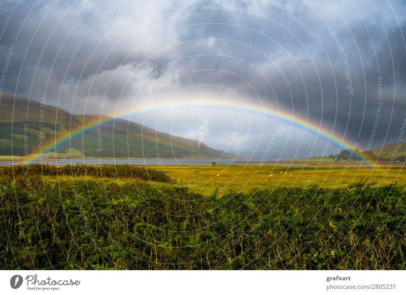 Regenbogen mit Schafen auf der Isle of Skye in Schottland Atlantik Atmosphäre Aussicht Bogen mehrfarbig Gold Großbritannien Himmel Klima Klimawandel Küste