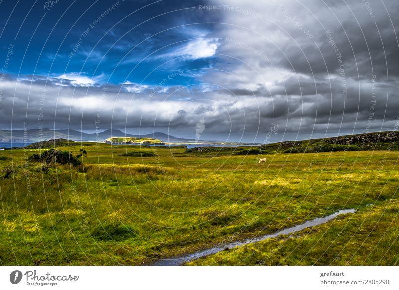 Landschaft mit Kuh and der Küste der Isle of Skye in Schottland Himmel Natur Sommer Wasser Meer Wolken Tier Reisefotografie Berge u. Gebirge Umwelt Wege & Pfade