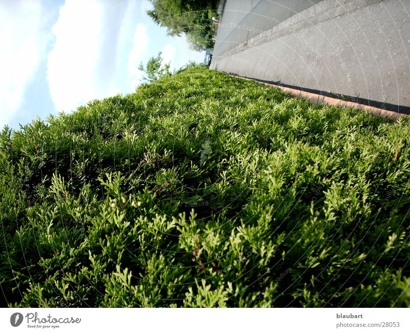 Die grüne Straße Hecke