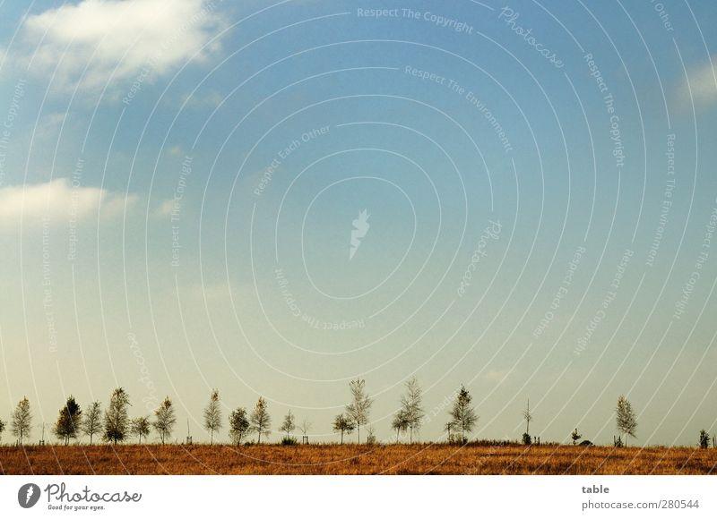 hinterm Horizont . . . Himmel Natur blau weiß Pflanze Baum Wolken Landschaft Ferne Umwelt Straße Gefühle Wege & Pfade Freiheit Luft