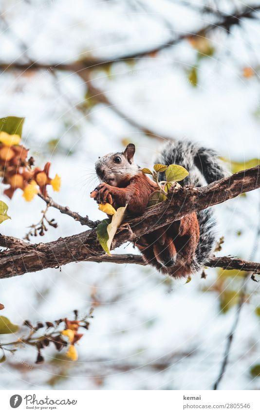 Costaricanischer Eichhörnchenmann Leben harmonisch Wohlgefühl Zufriedenheit Freizeit & Hobby Natur Pflanze Tier Schönes Wetter Baum Blatt Ast Costa Rica