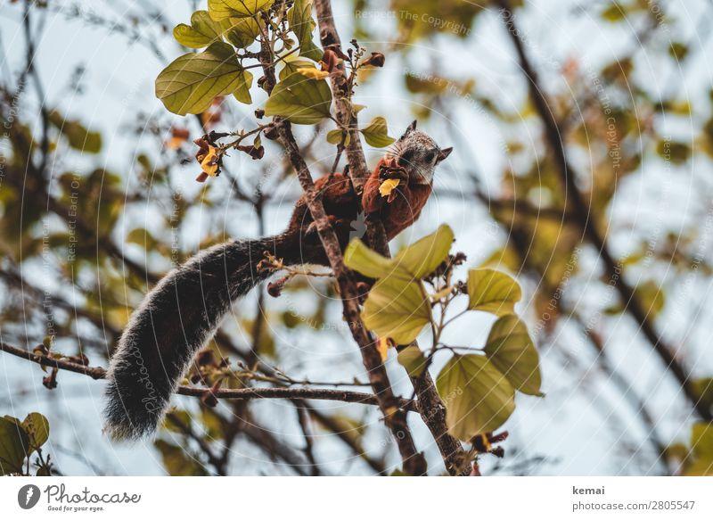 Hallo, Tourist. Leben harmonisch Wohlgefühl Zufriedenheit ruhig Ferien & Urlaub & Reisen Sommer Natur Pflanze Tier Himmel Schönes Wetter Baum Blatt Ast