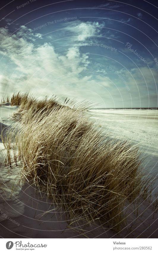 Spiekeroog | ...last year in april Umwelt Natur Landschaft Pflanze Erde Sand Himmel Wolken Sonne Sonnenlicht Frühling Schönes Wetter Strand Nordsee Insel