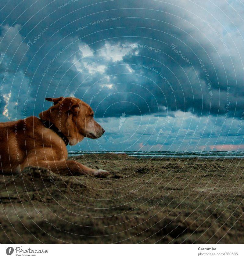 Hund(ert) Hund Strand Tier Wolken ruhig Sand liegen warten Haustier