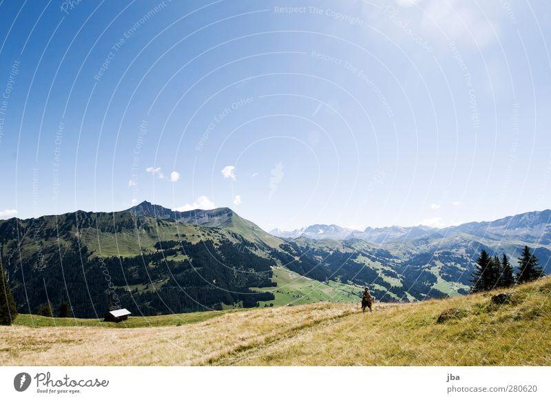 auf der Wispile Wohlgefühl Erholung ruhig Ausflug Freiheit Berge u. Gebirge wandern 1 Mensch Natur Landschaft Pflanze Luft Himmel Sommer Schönes Wetter Gras