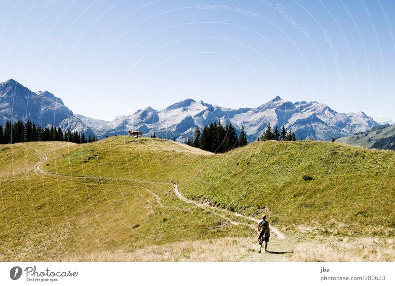 auf der Wispile II Natur Sommer ruhig Landschaft Erholung Ferne Berge u. Gebirge Leben Herbst Gras Wege & Pfade Freiheit wandern Ausflug Urelemente