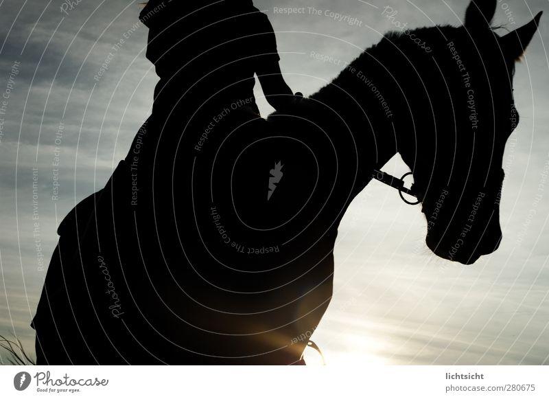 Schattenreiter Reitsport Reiten Mensch 1 Himmel Wolken Nachthimmel Sonnenaufgang Sonnenuntergang Sonnenlicht Schönes Wetter Tier Haustier Pferd blau Abendsonne
