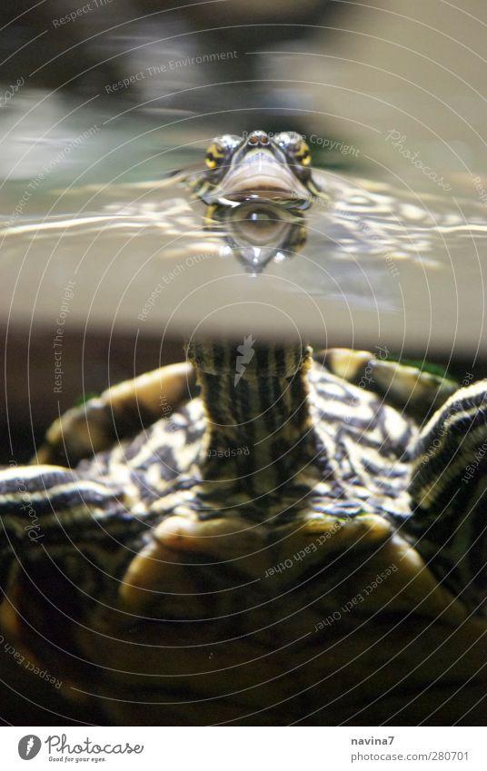 was gugsch du ? Wasser grün Tier Luft Schwimmen & Baden beobachten Zoo Haustier atmen Hals Aquarium füttern Schildkröte