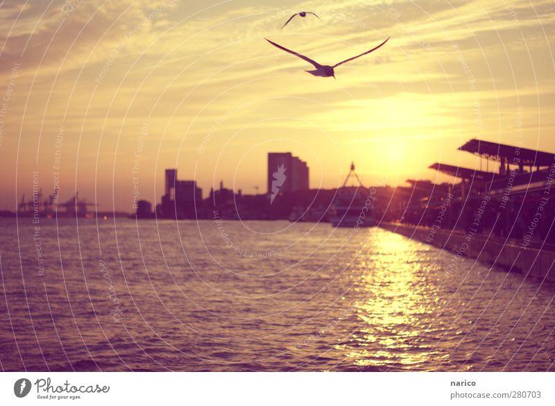 der letzte Augenblick... Stadt Sommer Tier Leben träumen Vogel Stimmung fliegen Zufriedenheit Hochhaus Schönes Wetter Flügel Romantik Fluss Hafen Skyline