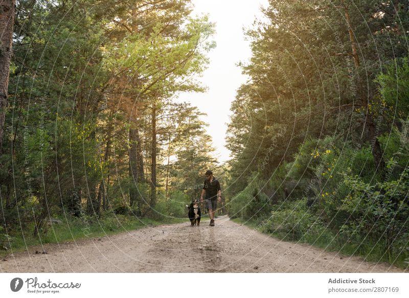 Abenteurer mit seinem Hund im Wald an einem sonnigen Frühlingstag. Natur laufen Berge u. Gebirge Trekking Mensch Jugendliche Sonnenstrahlen wandern Park schön