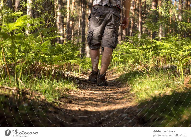 Abenteuerlustiger Mann im Wald an einem sonnigen Frühlingstag Natur laufen Berge u. Gebirge Trekking Mensch Jugendliche Sonnenstrahlen wandern Park schön