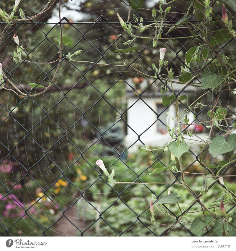eingezäunt I ruhig Freizeit & Hobby Garten Umwelt Natur Pflanze Blume Blüte Zaun Maschendraht Blühend Wachstum natürlich wild Schrebergarten Kleingartenkolonie