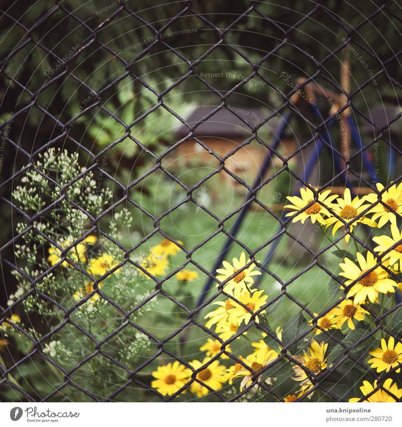 eingezäunt II ruhig Freizeit & Hobby Umwelt Natur Blume Blüte Zaun Maschendraht Blühend Wachstum natürlich wild Schrebergarten Kleingartenkolonie Gartenhaus
