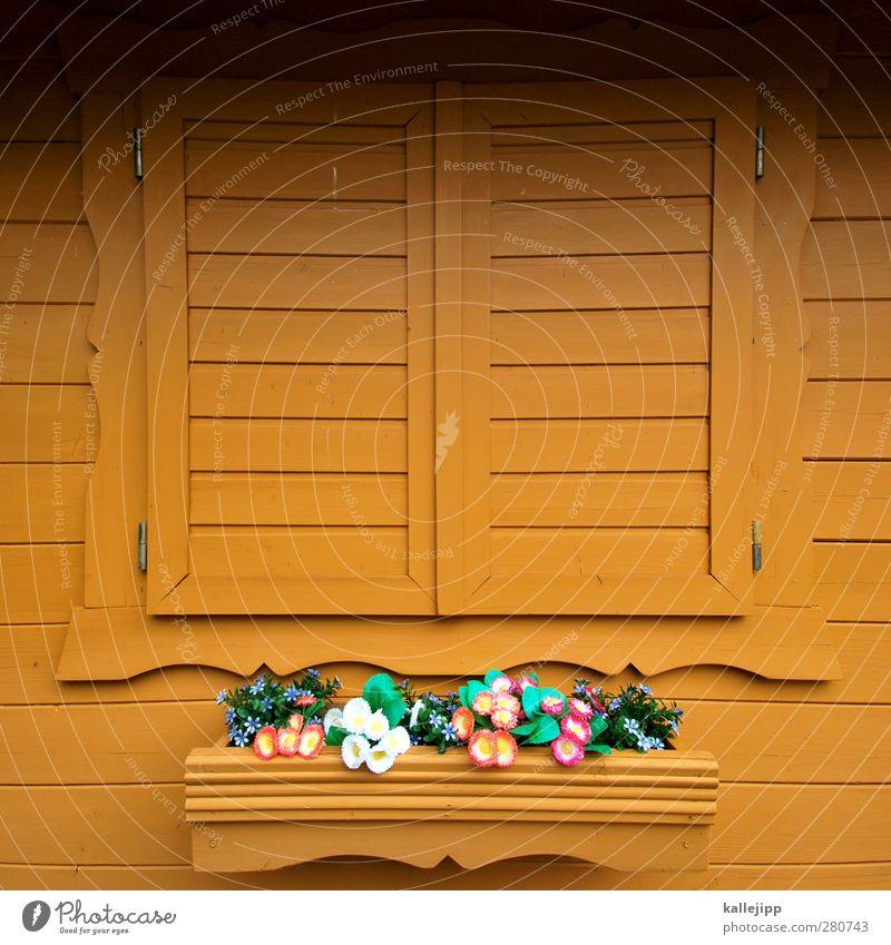 jenseits des protokolls Lifestyle Stil Häusliches Leben Wohnung Haus Garten Dekoration & Verzierung Fassade Fenster mehrfarbig Blume Fensterbrett Fensterladen