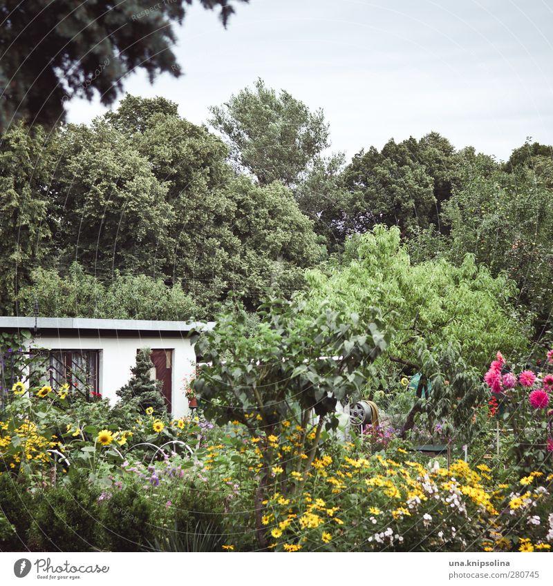 des gärtners blütenpracht Natur grün Pflanze Baum Blume Umwelt Garten natürlich Freizeit & Hobby wild Wachstum viele Blühend Schrebergarten Gartenhaus