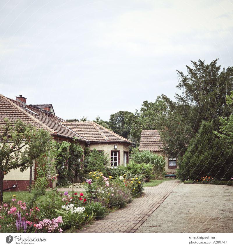 freiraum Natur grün Stadt Pflanze Baum Blume Haus Umwelt Garten natürlich Freizeit & Hobby wild Platz Häusliches Leben Sträucher trist
