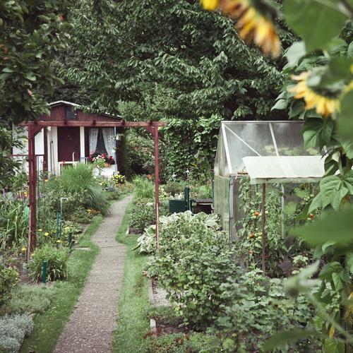 wer im glashaus sitzt.. Natur grün Pflanze Baum Blume Umwelt Garten natürlich Freizeit & Hobby wild Wachstum viele Fußweg Blühend verstecken Sonnenblume