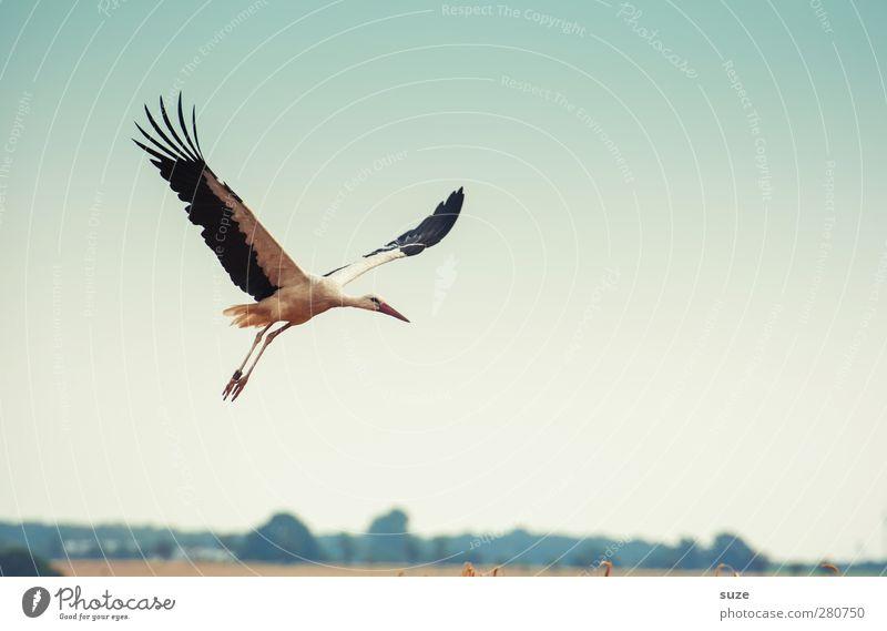 wenn er ... Glück Umwelt Natur Tier Himmel Wolkenloser Himmel Sommer Schönes Wetter Feld Vogel Flügel Zeichen fliegen blau gelb Optimismus Hoffnung Wunsch