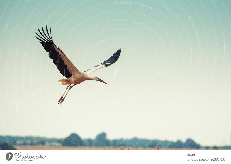 wenn er ... Himmel Natur blau Sommer Tier gelb Umwelt Bewegung Freiheit Glück Vogel Feld fliegen Feder Schönes Wetter Flügel