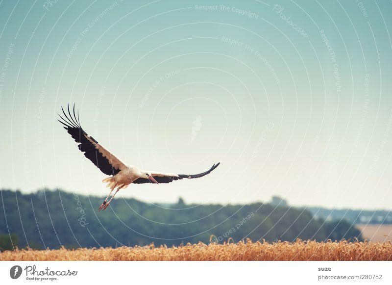 einer einen ... Glück Umwelt Natur Landschaft Tier Himmel Wolkenloser Himmel Sommer Schönes Wetter Feld Vogel Flügel Zeichen fliegen blau gelb Optimismus