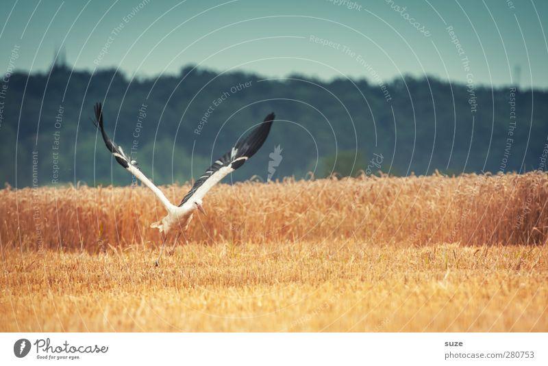 mir doch ... Himmel Natur blau Sommer Tier Landschaft gelb Umwelt Bewegung Freiheit Glück Vogel Feld fliegen Feder Schönes Wetter