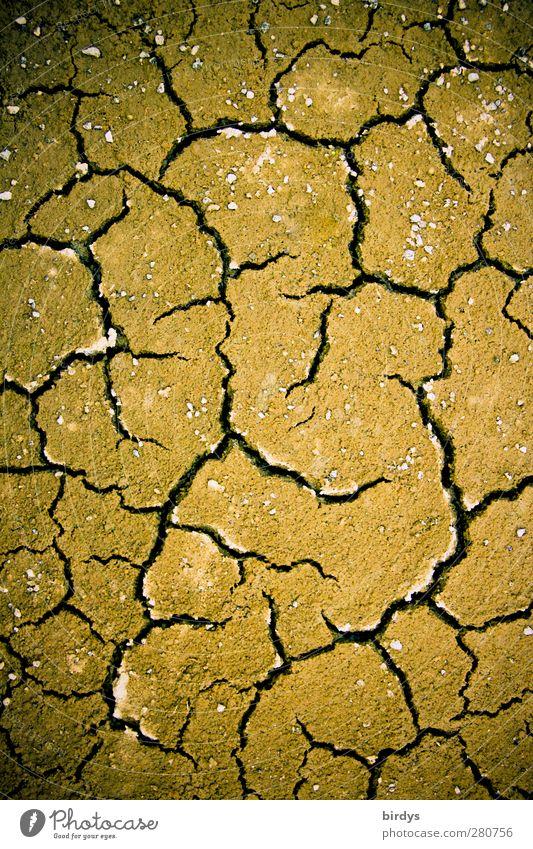 Klimawandel Natur braun Erde Wandel & Veränderung bedrohlich Riss Zukunftsangst Umweltverschmutzung Krise Dürre Überleben Endzeitstimmung dehydrieren
