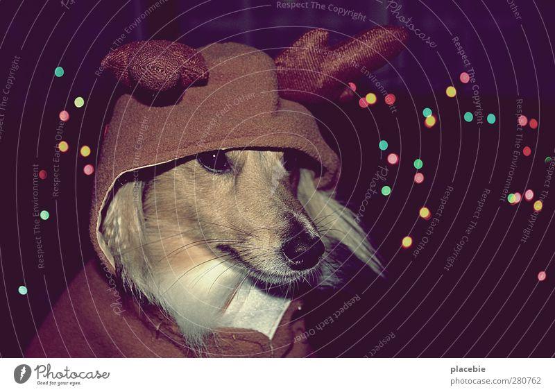 Es ist ein Elch entsprungen. Hund Weihnachten & Advent schön Freude Tier lustig Glück Denken außergewöhnlich braun glänzend träumen leuchten