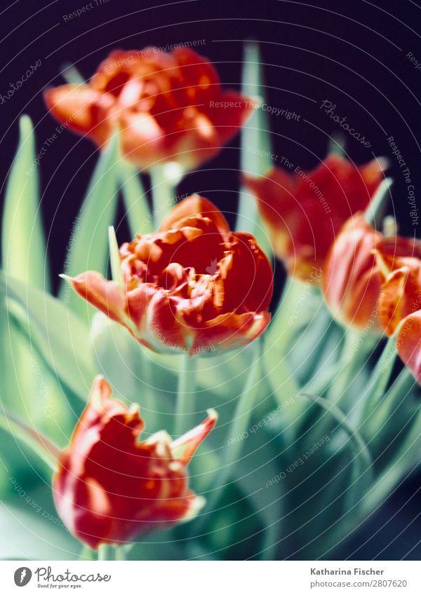 rote Blüten dekorativ Blumenstrauß Natur Sommer Pflanze schön grün weiß Blatt Winter Herbst gelb Frühling orange Dekoration & Verzierung
