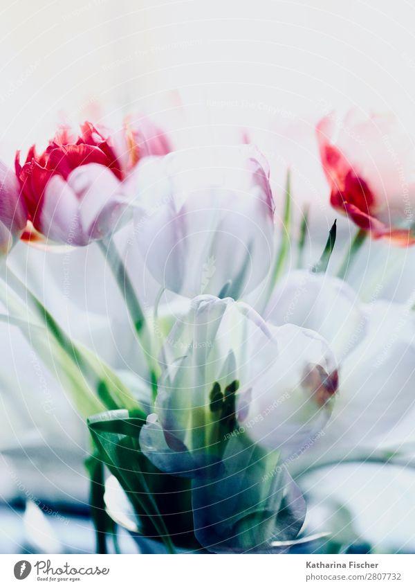 weiß rot grün Blumenstrauß malerisch Kunst Kunstwerk Natur Pflanze Frühling Sommer Herbst Winter Tulpe Blatt Blüte Blühend leuchten hell schön violett rosa