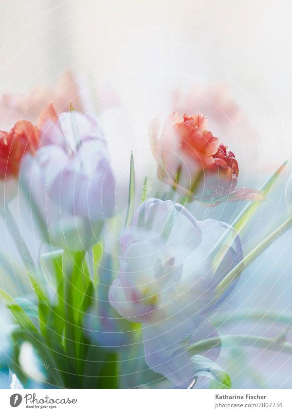 malerischer Blumenstrauß Natur Sommer grün weiß rot Blatt Winter Herbst gelb Blüte Frühling Kunst orange rosa Dekoration & Verzierung
