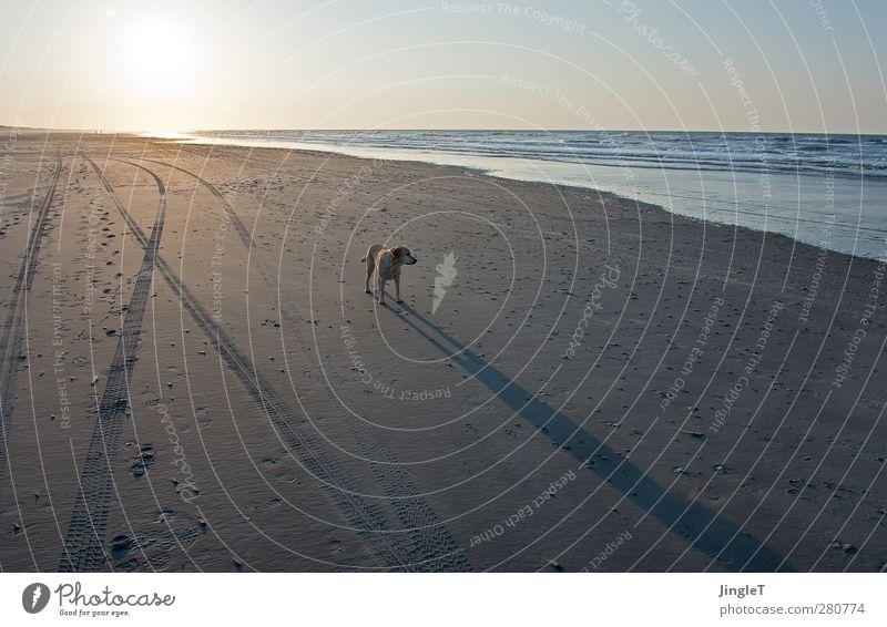 geburtstagswetter [jinglet & andere?] Hund Himmel Natur blau Wasser Ferien & Urlaub & Reisen Sonne Meer Strand Tier Landschaft Ferne Umwelt Frühling Küste