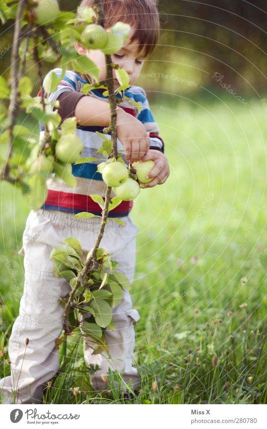 Erntehelfer Mensch Kind grün Sommer Baum Blatt Wiese Herbst Spielen Garten Gesundheit Kindheit Frucht Lebensmittel Ernährung süß