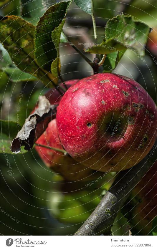 Karl staunt: voll bio! Lebensmittel Apfel Ernährung Umwelt Natur Pflanze Garten Wachstum frisch Gesundheit natürlich grün rot Gefühle Fröhlichkeit Zufriedenheit