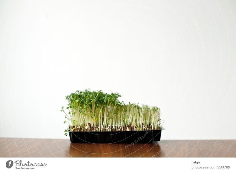 Shawn was here. Lebensmittel Gemüse Kräuter & Gewürze Ernährung Vegetarische Ernährung Wachstum einfach frisch Gesundheit nachhaltig natürlich grün rein