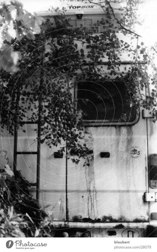Idylle weiß Baum schwarz Verkehr Sträucher Wohnmobil