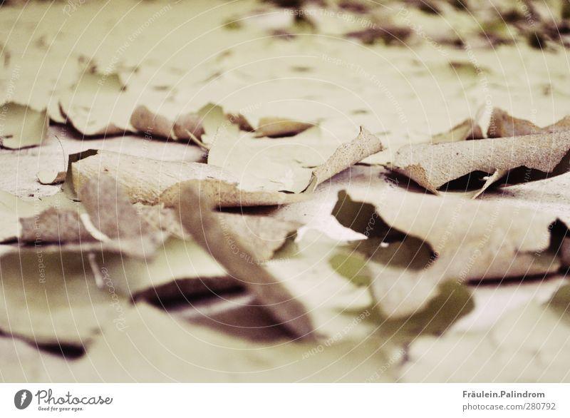 frisch gestrichen! Menschenleer Mauer Wand Fassade alt Armut gruselig hässlich kalt kaputt nah trist Stadt grau grün authentisch sparsam Angst unbeständig