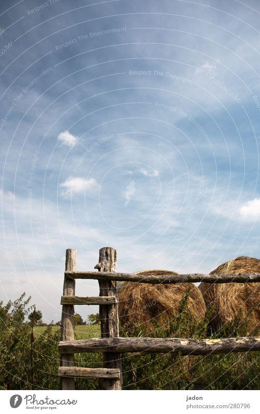 der weg nach oben. Himmel Natur blau grün Sommer Wolken Landschaft Gras Wege & Pfade Holz Feld kaputt Sicherheit Landwirtschaft Bauwerk Zaun