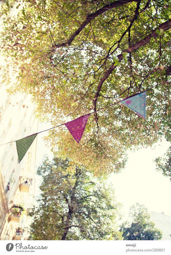 [b]unt Umwelt Natur Frühling Sommer Schönes Wetter Pflanze Baum natürlich grün Girlande Dekoration & Verzierung Party Feste & Feiern festlich mehrfarbig
