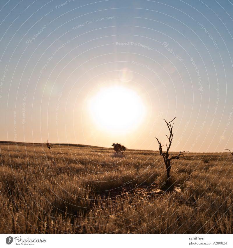 Wo geht's hier zum Sundowner? Umwelt Natur Landschaft Wolkenloser Himmel Sonne Sonnenaufgang Sonnenuntergang Sonnenlicht Dürre Gras Wüste trocken Steppe