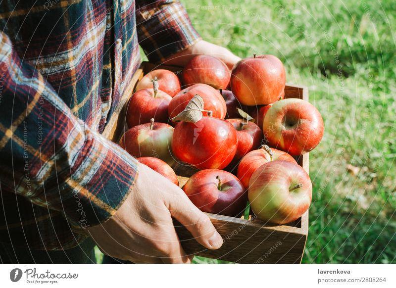 Mann im karierten Hemd mit Holzkiste und Bio-Äpfeln Apfel pflücken gesichtslos Gras Herbst Hand Vegetarische Ernährung Diät Landwirtschaft Ernte Tablett Kasten